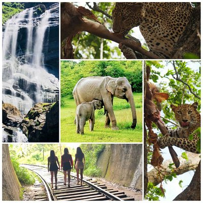 Travelers around the world experienced Sri Lanka with Blue Haven Tours !