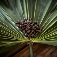 The place where fresh-roasted, specialty coffee where the jungle meets the sea...