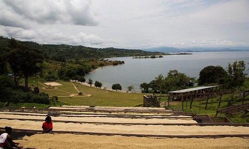 Kinunu is located in Rutsiro district, in the western province of Rwanda. This green area that runs along the shores of Lake Kivu and is popularly known for producing high-quality coffee. In addition to being an agricultural area, Kinunu is the base camp for the Congo Nile Trail which offers an exciting hiking experience.