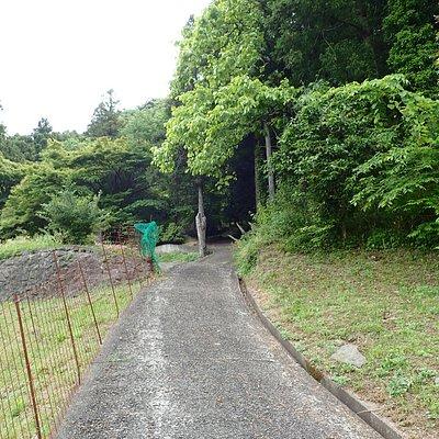 100mちょっと山を登るとそこに八千矛山大国主神社の祠がありました。