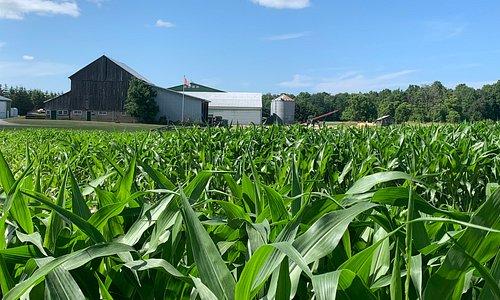Nottawasaga Valley Farms, New Tecumseth - Thompsonville