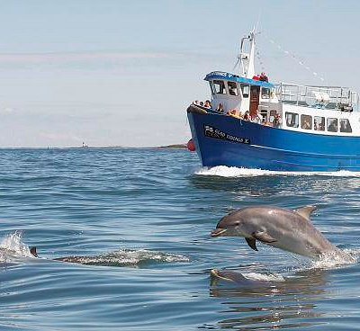 Glad Tidings 5 with Dolphins