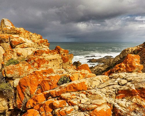 Rock covered in vivid orange Lichen along the St Blaise Trail in the Garden Route