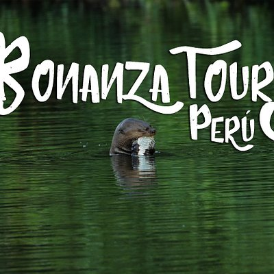 Inspiring Worldwide Conservation Through Adventure.​ We are a family-run company based in Cusco offering camping and trekking expeditions deep into the jungle. Our expeditions bring you close to the restricted Biological Research Zone of the Manu National Park.