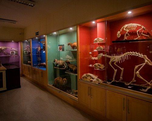 Some of our long standing cabinet displays showing a representative of each of the main animal clades.