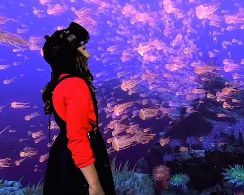 Experience Amazing undersea adventures in The Blue at Centre VR.