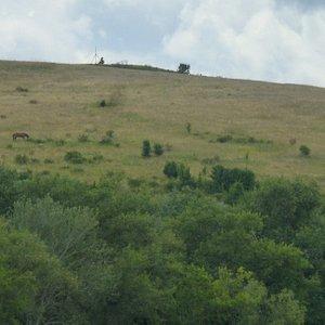 Возле Кошав-Горы. Пасутся кони