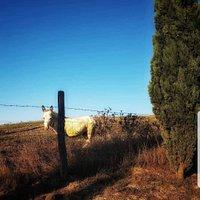 Azienda Agricola Fior di Montalcino della famiglia Chironi  vi aspetta per accogliervi nel nostro mondo