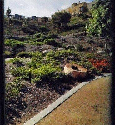manicured grounds along walkway