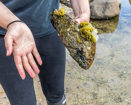 Coastal foraging walk, Abalone farm tour and tasting in Rossaveal, Galway with Sinead and Cindy