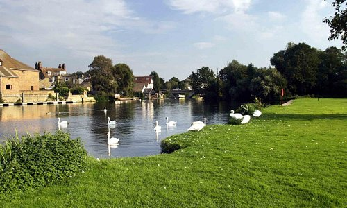 Peaceful walks, cafes, picnic tables, children's play areas and a miniature railway ride are all found in the St Neots Riverside parks.  The parks are also one of the best locations for seeing bird wildlife.  The Riverside parks are the habitat of a very large population of swans, geese, ducks and herons