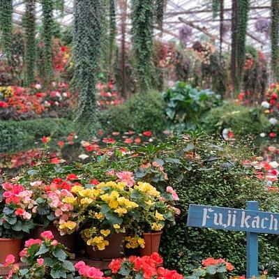 一面に広がる色とりどりの花、あちこちから聞こえる鳥たちの楽しそうな声、ここは花と鳥の別天地、富士花鳥園です。 花に囲まれて癒しの時間を過ごすもよし、鳥たちとふれあって楽しい時間を過ごすもよし、ご当地グルメを食べておなかを満たすもよし…どのように過ごすかは、あなたの自由! 家族旅行の一環で、ご夫婦やカップルで楽しむ休日に、仲の良いお友達と一緒に、ぜひ富士花鳥園にお立ち寄りください。花や鳥たちと共に過ごすひと時が、あなたの身も心も癒してくれます。