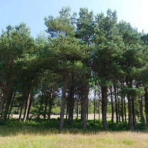 Tynwald National Park and Arboretum