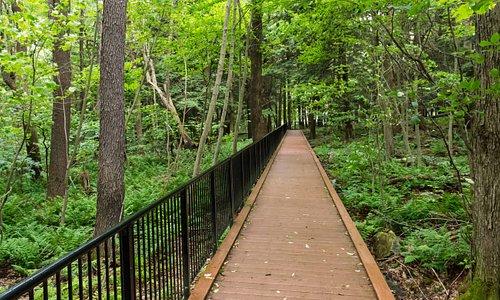 Boardwalk through Forest to Engine House