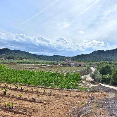 Visitar Celler Mas de les Vinyes. Vinos DO Montsant. Mas de les Vinyes es una bodega de vinos DO Montsant situado en  Cabacés, Comarca del Priorat.