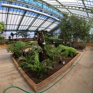 Invernadero de exposición. Parte de clima tropical.