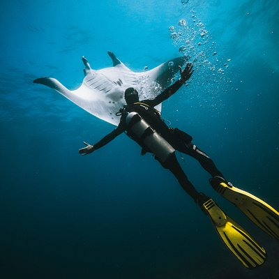 Dancing with Mantas