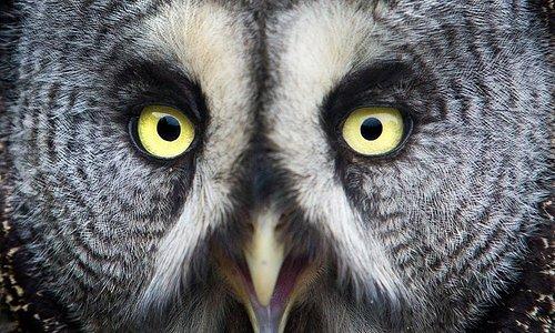 The Secret Owl Garden