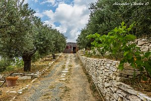 Best olives on Cyprus