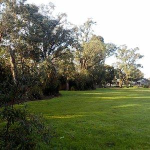 Grassy area