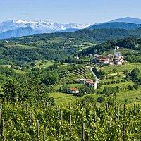 Views of snowy mountain tops of the Alps in Goriška Brda.