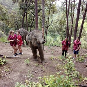 Trekking with the elephants in the nature on the Full Day Elephant Tour.  Chiang Mai Native Village