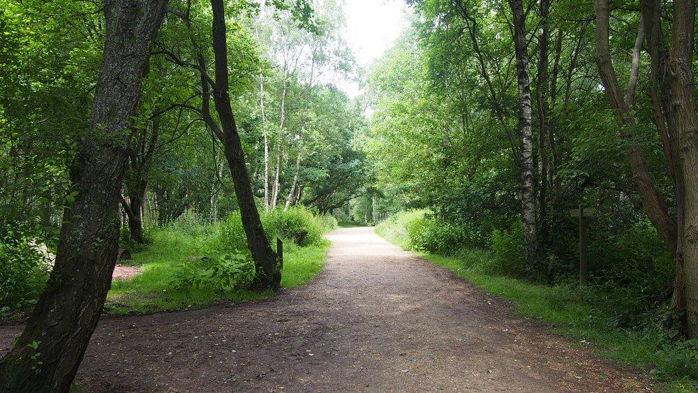 Walkway through the woodland