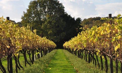 Autumn colours at Biddenden Vineyards