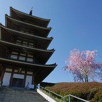 桜と青空と五重塔。