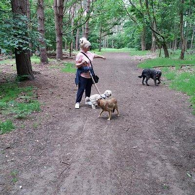 Rounding up the troops in Reffley Woods!
