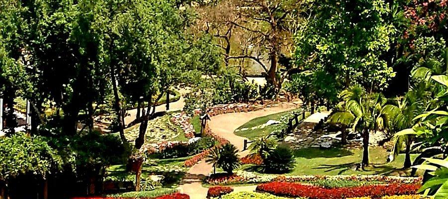 Royal Garden Doi Tung