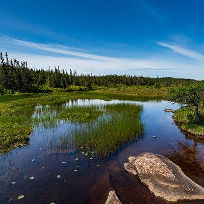 fresh water low lands