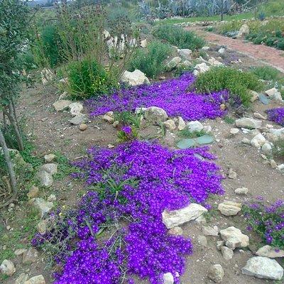 Botanische tuin op voormalige vuilstort Melkhoutfontein
