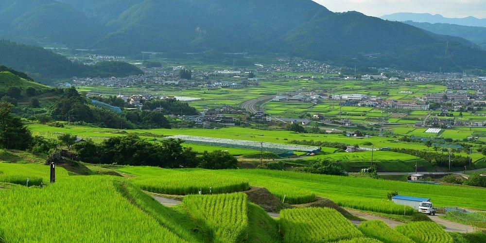 美しい水田。日本の原風景ですね〜。