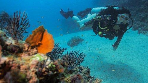 Scuba Diving in Puerto Vallarta