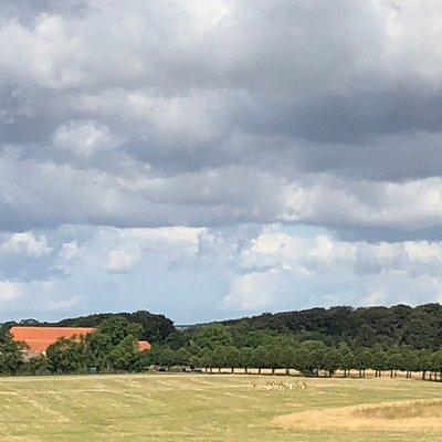 Dyreparken med Hindsgavl Slot i baggrunden