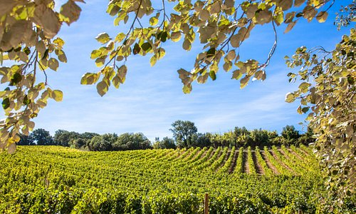 Já é Verão! Venha passear connosco pelas nossas vinhas e prove os nossos vinhos| It's summer time! Come take a walk with us through our vines and taste our wines