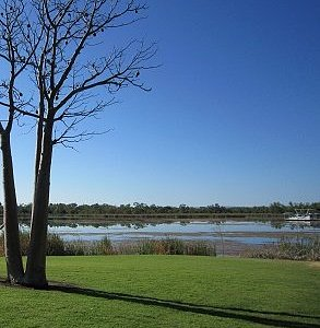 A Boab Tree With The Lily Pond Lagoon Behind