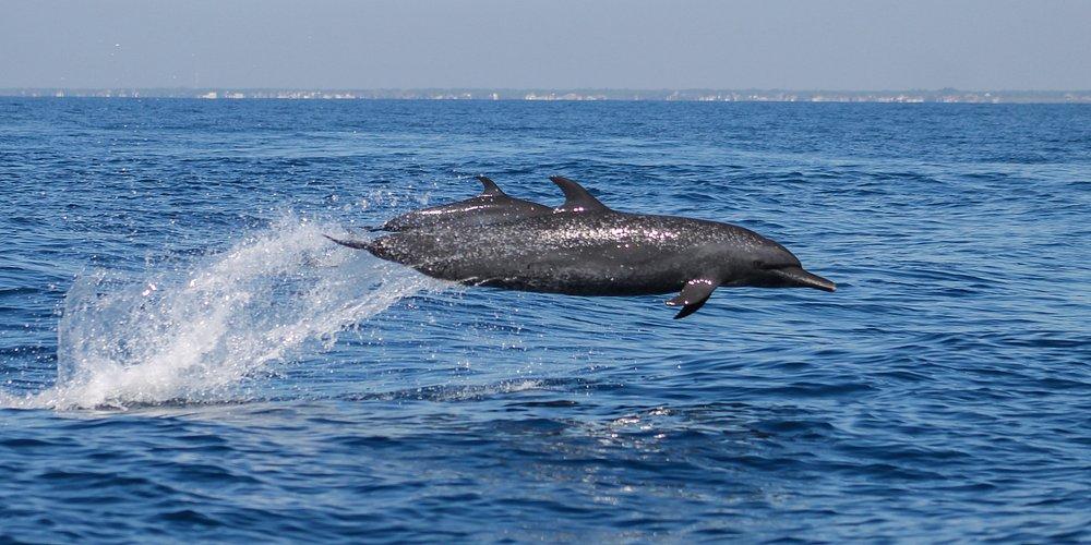 Avistamiento de delfines en costa pacífica de Guatemala