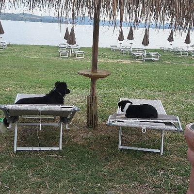 Passignano Dog Beach