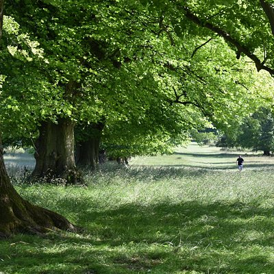 Lime Avenue in summer