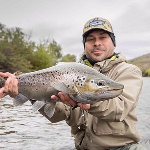 Fly Fishing in Limay River, wild brown trout.