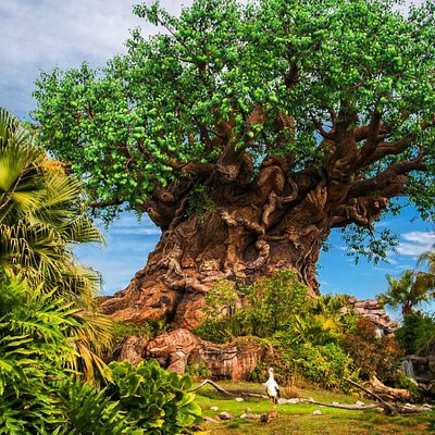 The Tree of Life at Disney's Animal Kingdom Theme Park