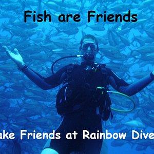 Come and make friends