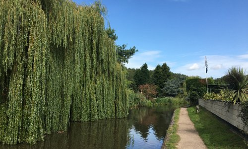 Birmingham and Fazeley Canal. Lovely view with bordering weeping Willow tree.