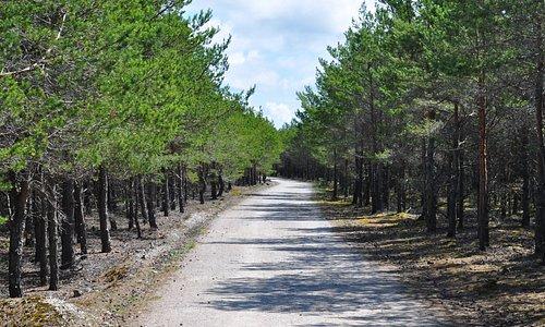 Часть дороги к маяку Kiipsaare