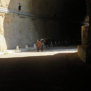 Túneles de acceso peatonal