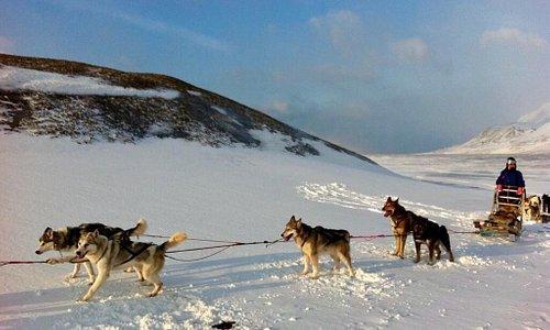 Huskies are waiting you for sledding