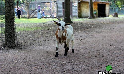 Les animaux du Parc Friedel.