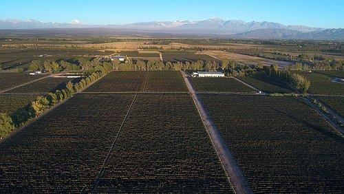 Vista aérea de los viñedos.